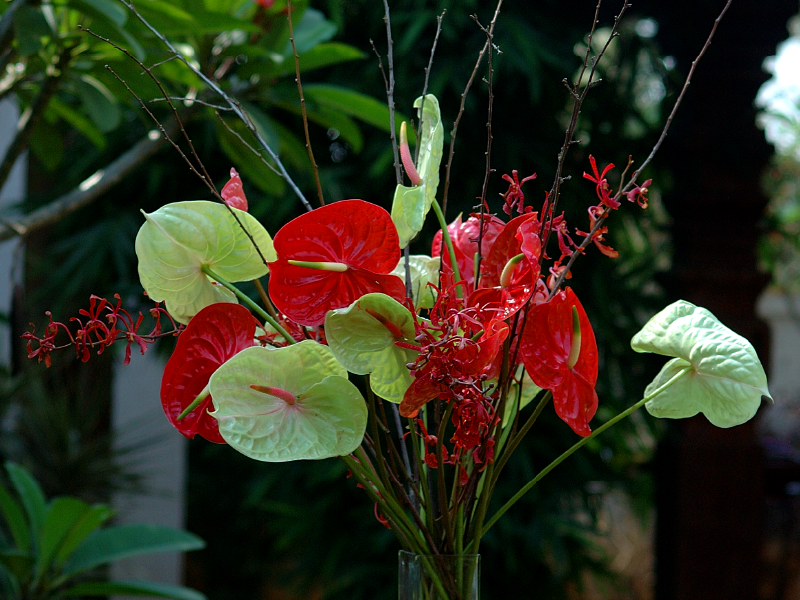 Striking Anthuriums